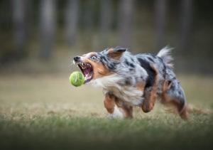 Hundfotograf, Hundfotografering, Actionfotografering