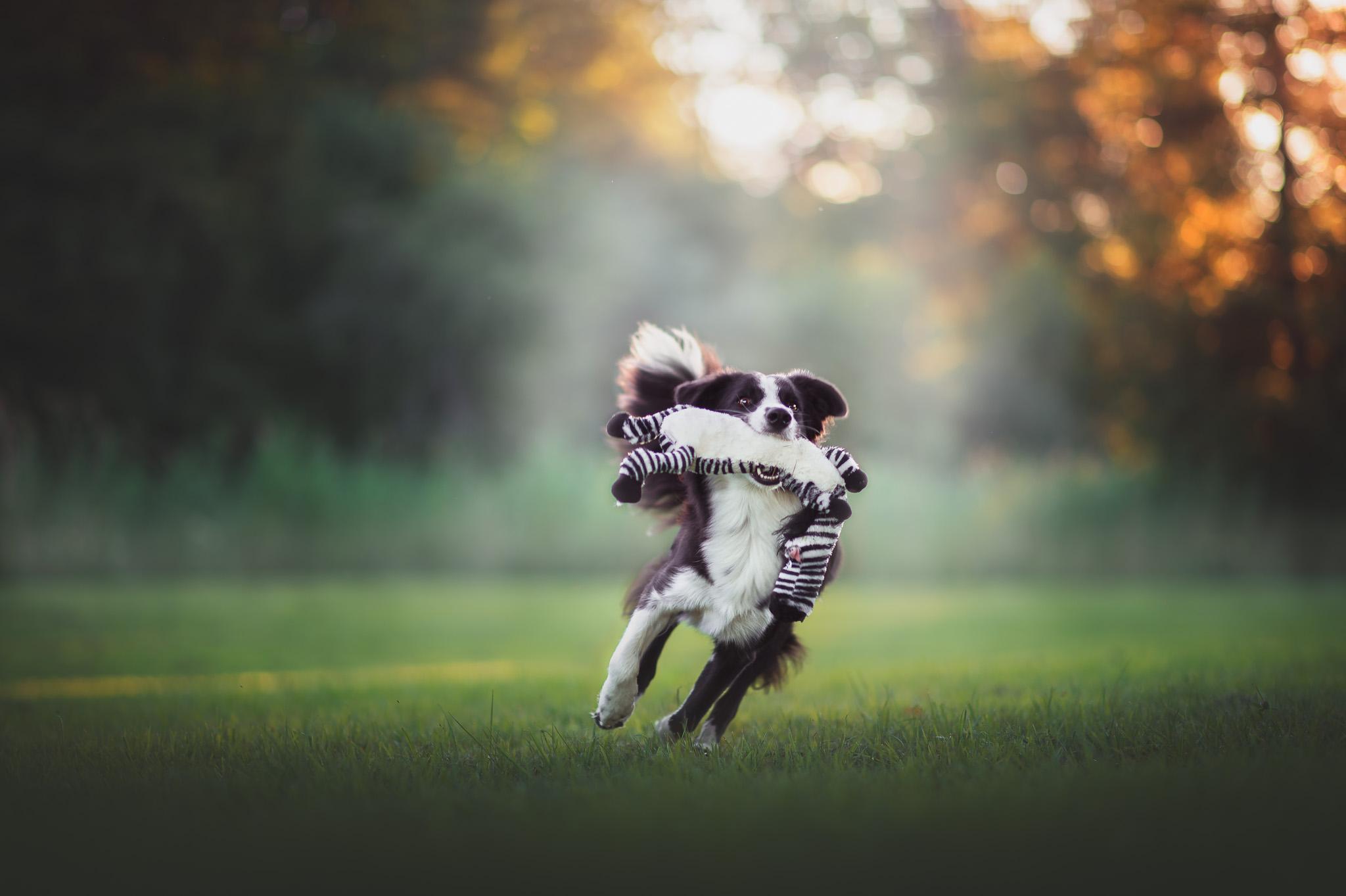 Hundfotograf, Hundfotografering,