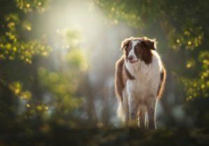Hundfotograf, Hundfotografering, Hundfotografering vår