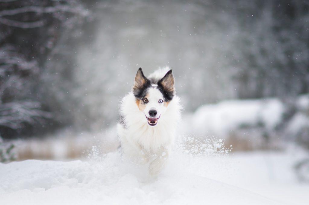 Hundfotografering, Hundfotograf i Stockholm