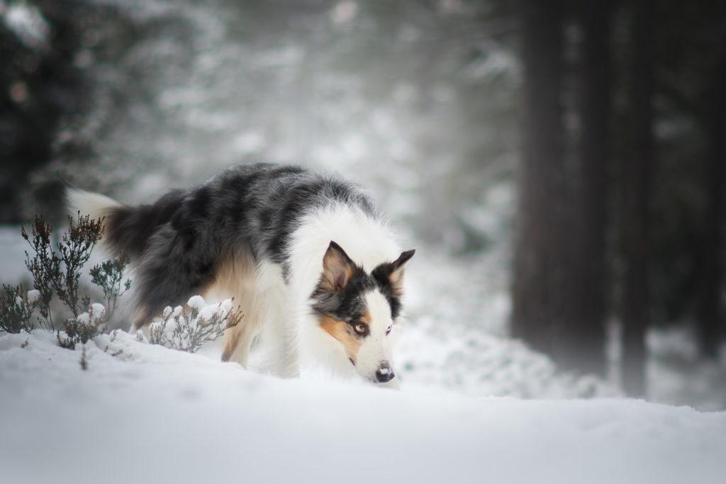 hundfotograf, hundfotografering i stockholm, vinterbilder