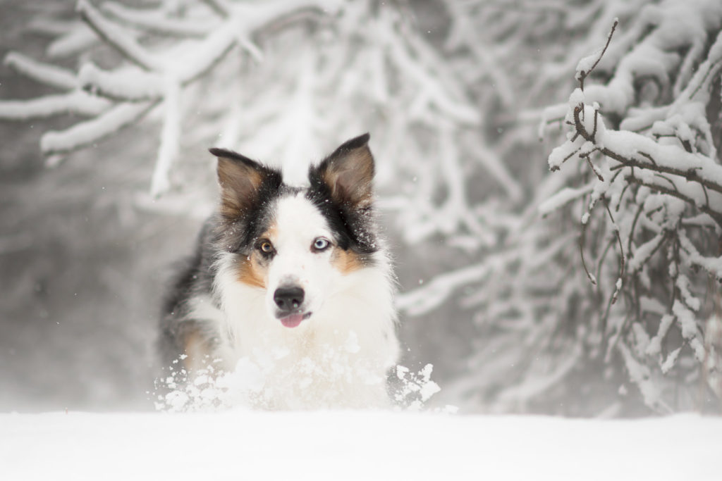 Hundfotograf, Hundfotografering, Vinterbilder
