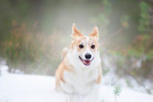 Hundfotograf, Hundfoto, Hundfotografering