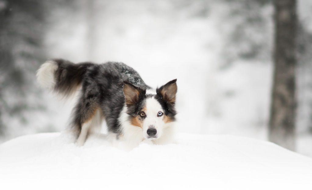 Hundfotograf, Hundfotograf i Stockholm