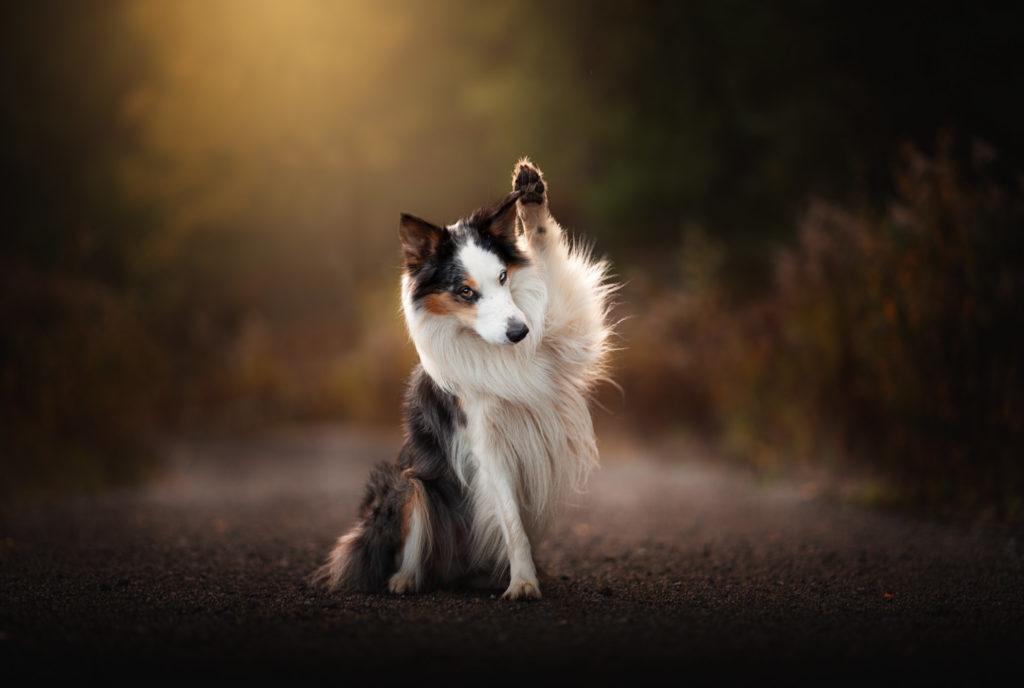 Hundfotograf i Stockholm, höstbilder