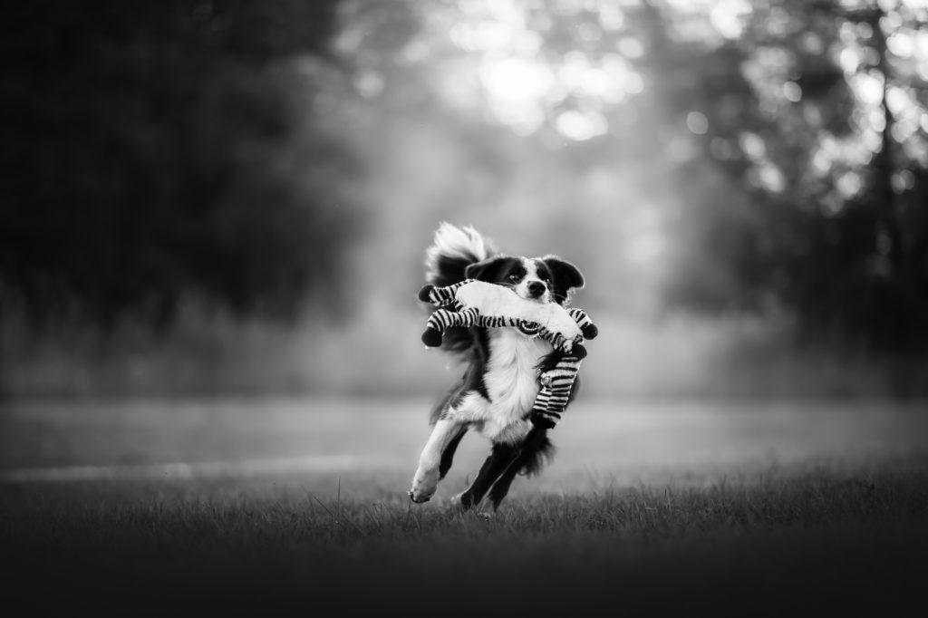 Hundfotograf, Hundfotografering, Hundfoto