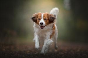 hundfotograf, hundfotografering, actionbild hund