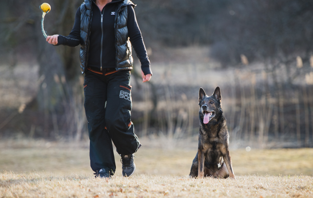 Hundfotograf, Hundtränare, Hundfotografering