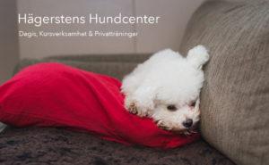 Hundföretagsfoto, Hundföretag, Företagsfotografering, Hundfotograf
