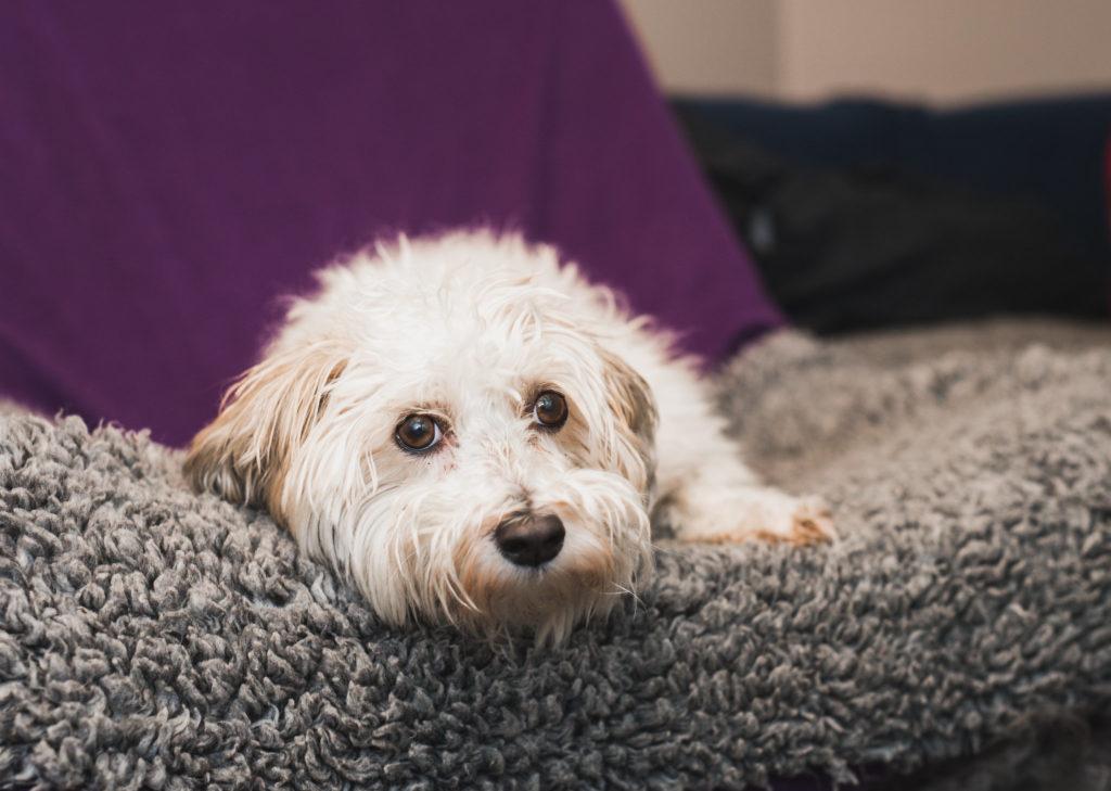 Hundföretagsfotografering, Företagsfotografering, Hunddagis, Hundfotograf
