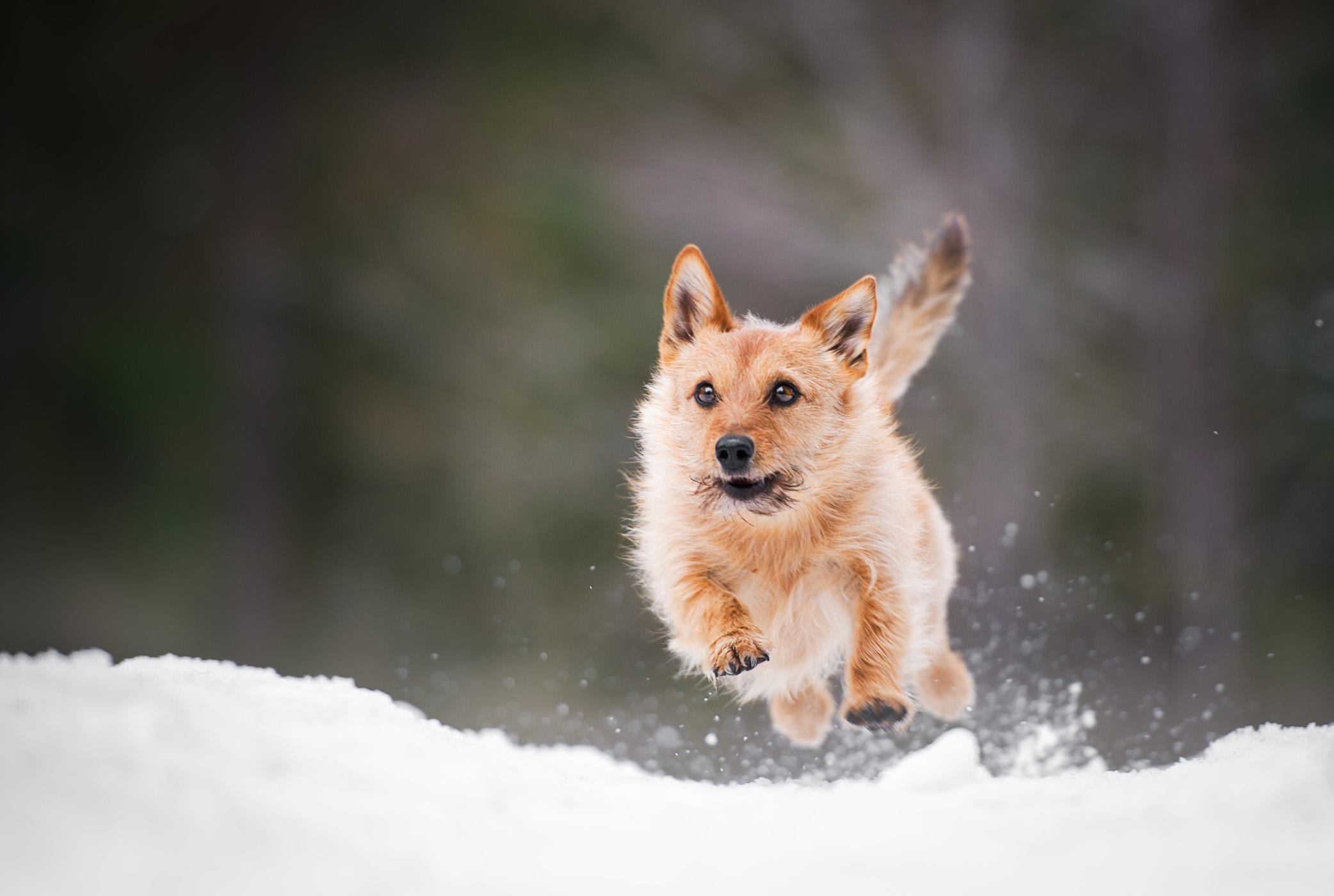 Hundfotograf Stockholm